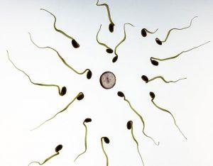 Big Testicles More Sperm